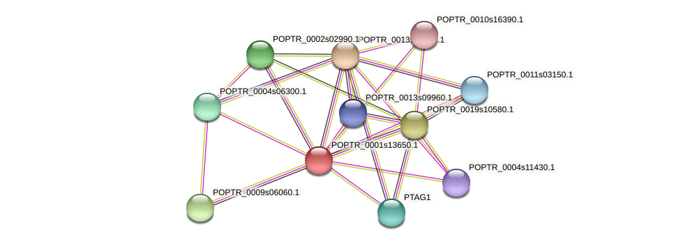 POPTR_0001s13650.1 protein (Populus trichocarpa) - STRING interaction network