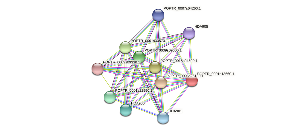 POPTR_0001s13660.1 protein (Populus trichocarpa) - STRING interaction network