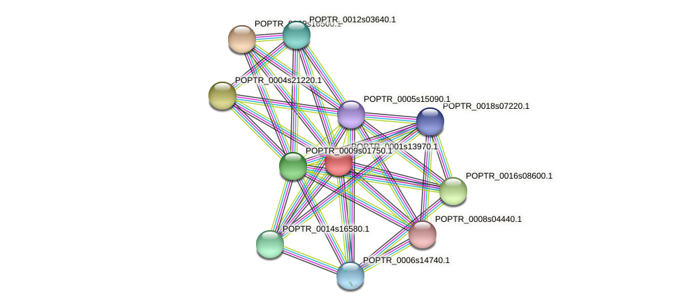 POPTR_0001s13970.1 protein (Populus trichocarpa) - STRING interaction network