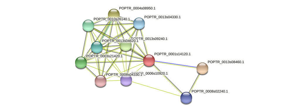 POPTR_0001s14120.1 protein (Populus trichocarpa) - STRING interaction network