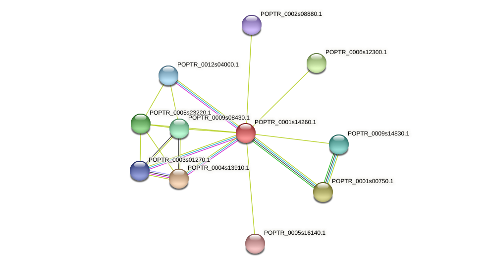 POPTR_0001s14260.1 protein (Populus trichocarpa) - STRING interaction network