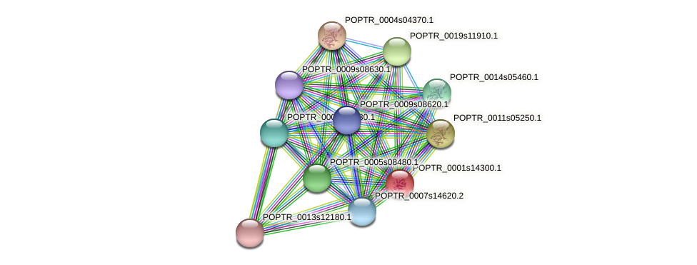 POPTR_0001s14300.1 protein (Populus trichocarpa) - STRING interaction network