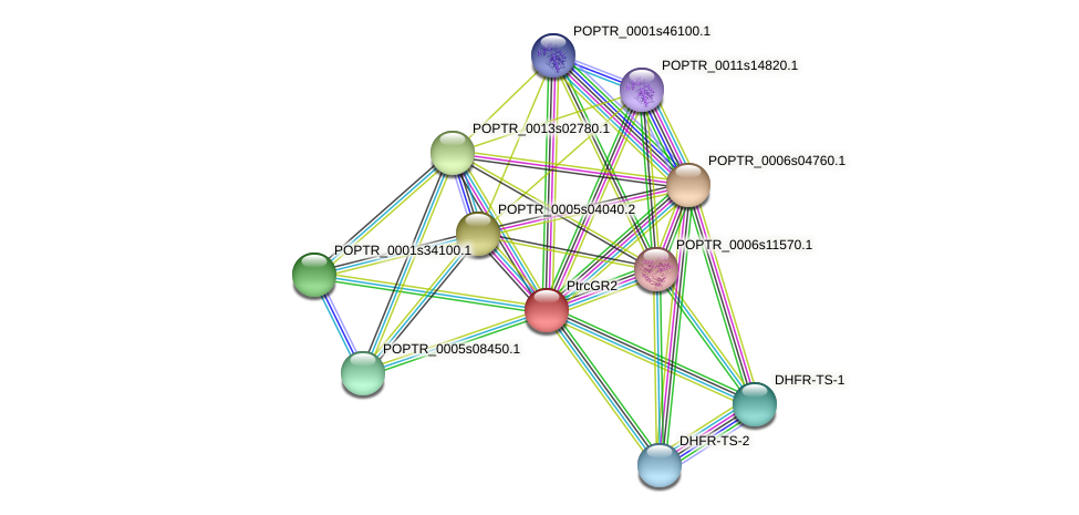 POPTR_0001s14480.1 protein (Populus trichocarpa) - STRING interaction network