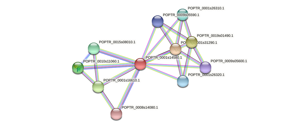 POPTR_0001s14580.1 protein (Populus trichocarpa) - STRING interaction network