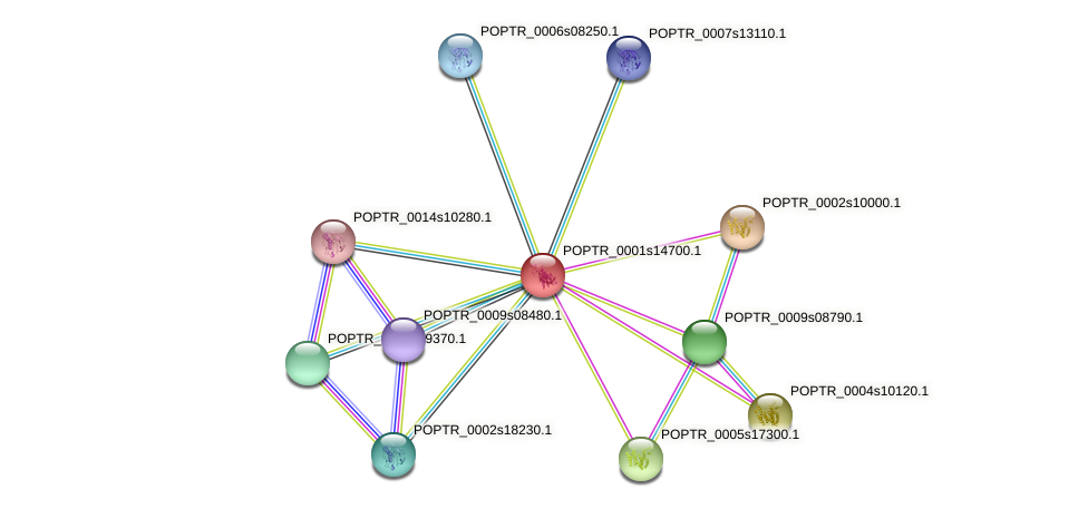 POPTR_0001s14700.1 protein (Populus trichocarpa) - STRING interaction network