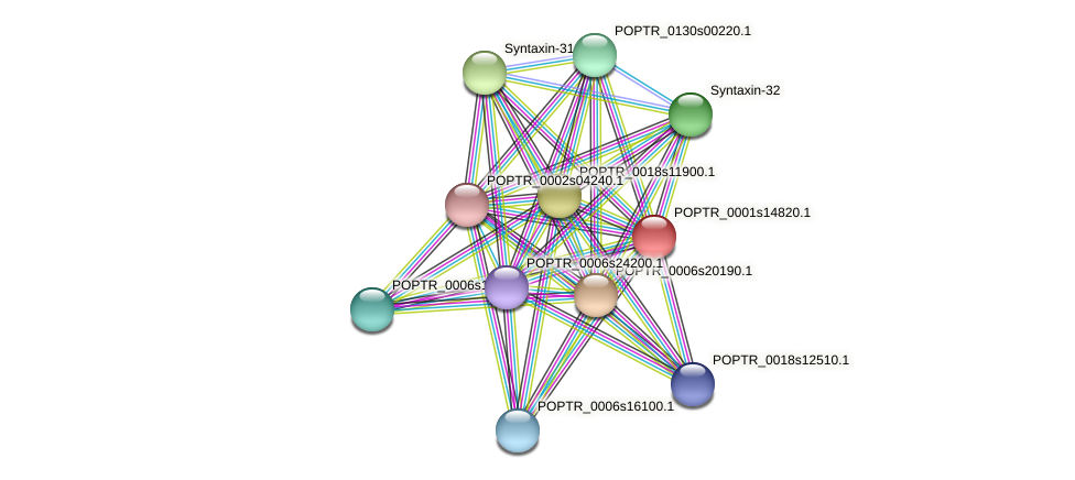 POPTR_0001s14820.1 protein (Populus trichocarpa) - STRING interaction network
