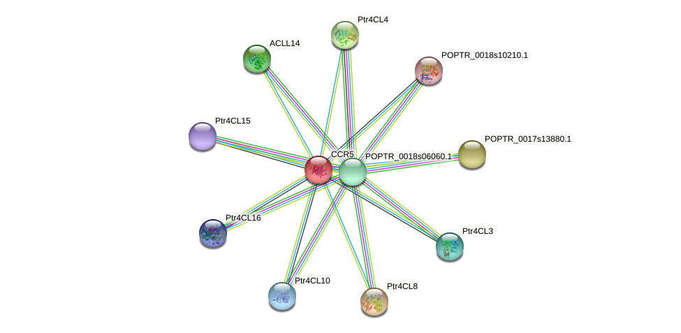 POPTR_0001s14910.1 protein (Populus trichocarpa) - STRING interaction network