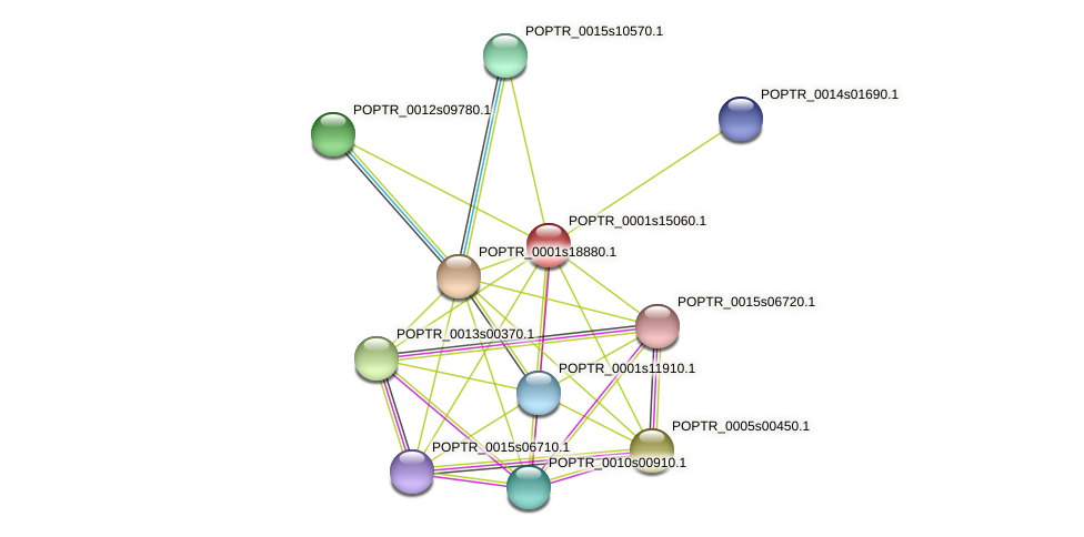 POPTR_0001s15060.1 protein (Populus trichocarpa) - STRING interaction network