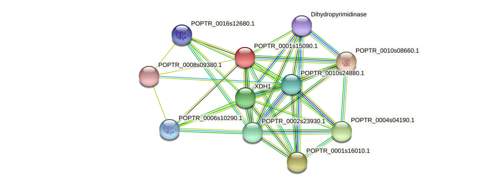 POPTR_0001s15090.1 protein (Populus trichocarpa) - STRING interaction network