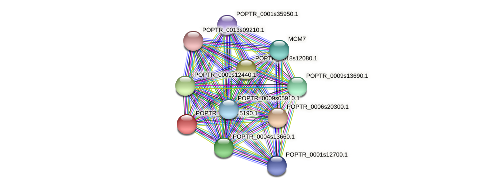 POPTR_0001s15190.1 protein (Populus trichocarpa) - STRING interaction network