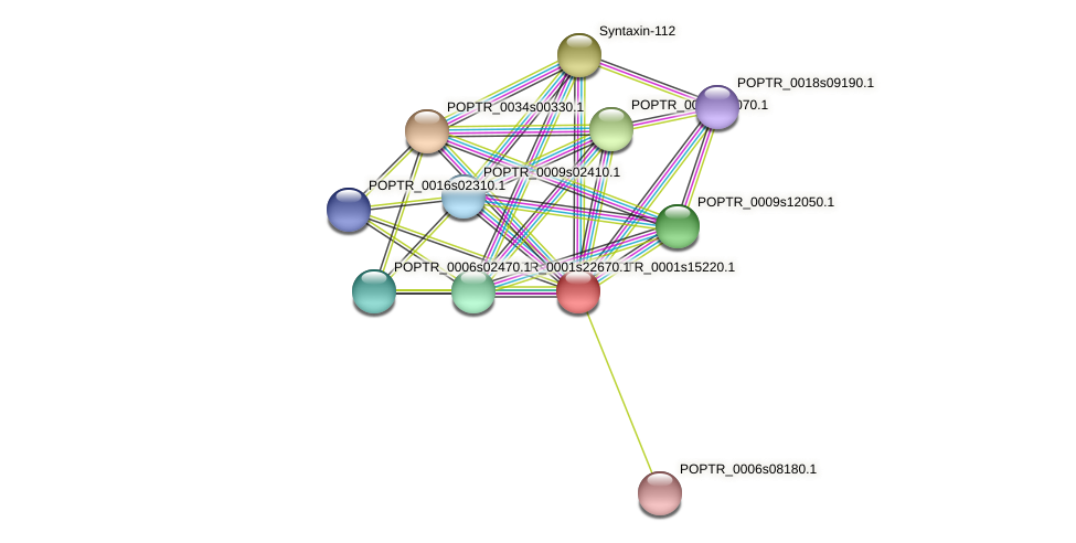 POPTR_0001s15220.1 protein (Populus trichocarpa) - STRING interaction network