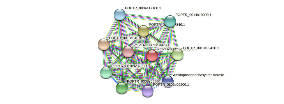 POPTR_0001s15650.1 protein (Populus trichocarpa) - STRING interaction network