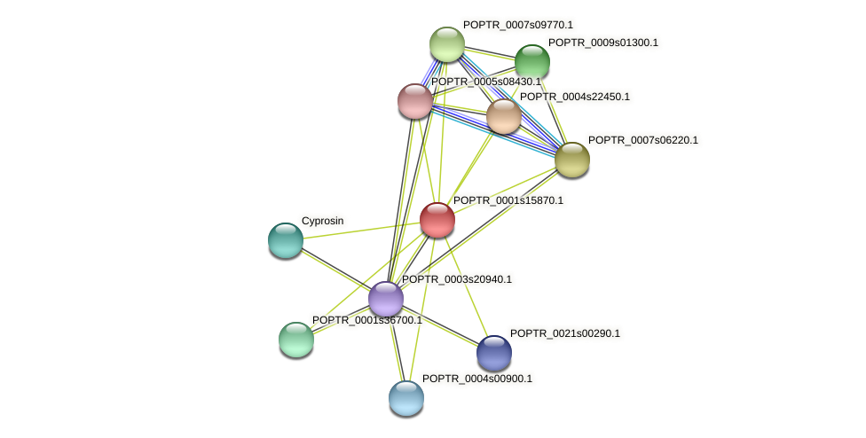 POPTR_0001s15870.1 protein (Populus trichocarpa) - STRING interaction network