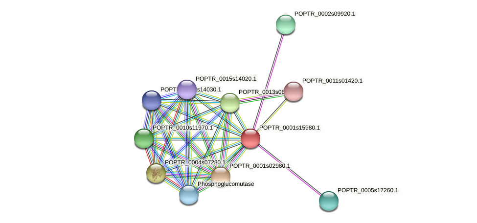 POPTR_0001s15980.1 protein (Populus trichocarpa) - STRING interaction network