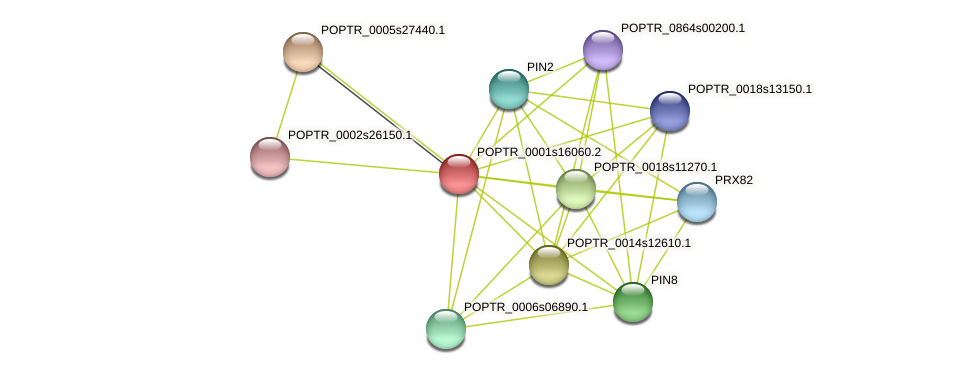 POPTR_0001s16060.1 protein (Populus trichocarpa) - STRING interaction network