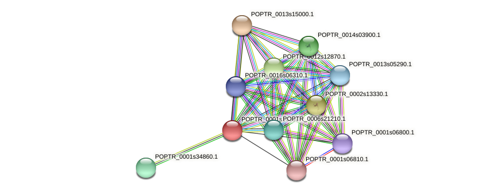 POPTR_0001s16090.1 protein (Populus trichocarpa) - STRING interaction network