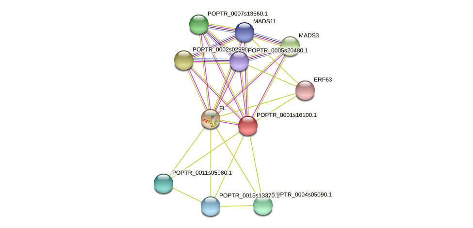 POPTR_0001s16100.1 protein (Populus trichocarpa) - STRING interaction network