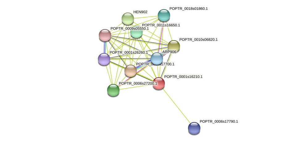 POPTR_0001s16210.1 protein (Populus trichocarpa) - STRING interaction network