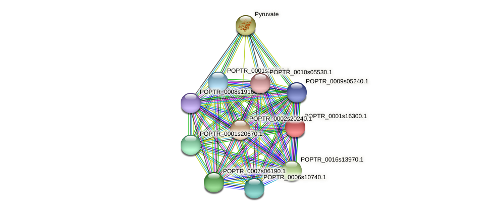 POPTR_0001s16300.1 protein (Populus trichocarpa) - STRING interaction network