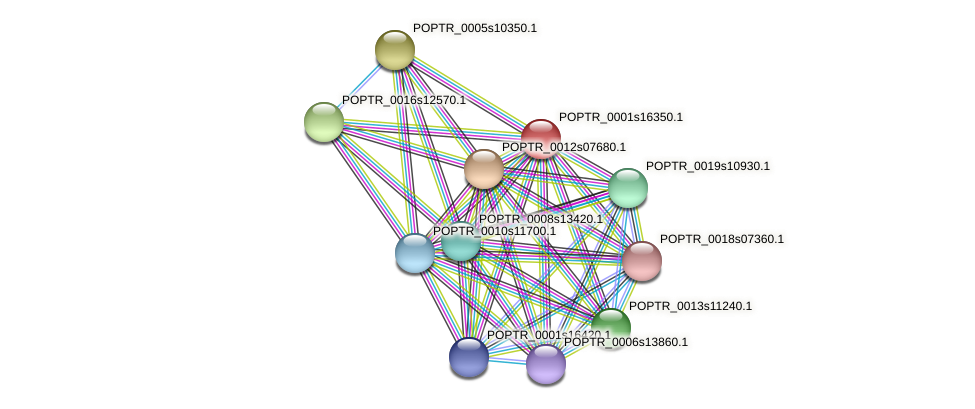 POPTR_0001s16350.1 protein (Populus trichocarpa) - STRING interaction network