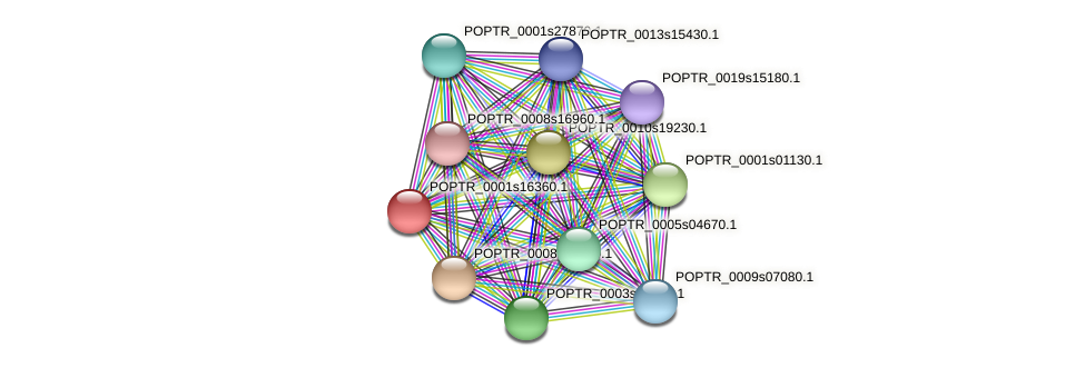 POPTR_0001s16360.1 protein (Populus trichocarpa) - STRING interaction network
