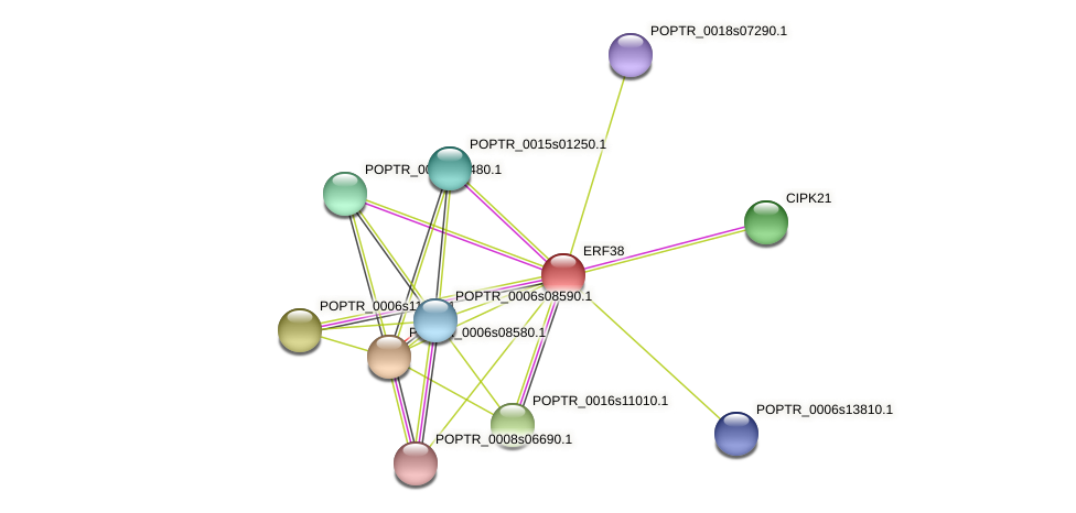 POPTR_0001s16400.1 protein (Populus trichocarpa) - STRING interaction network