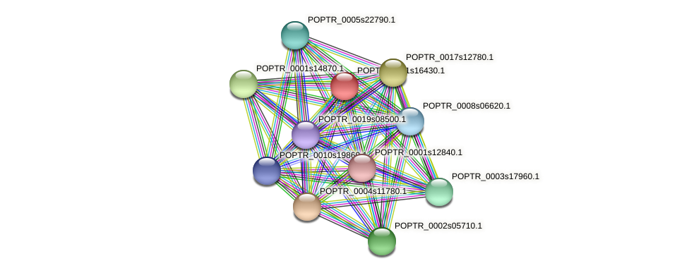 POPTR_0001s16430.1 protein (Populus trichocarpa) - STRING interaction network