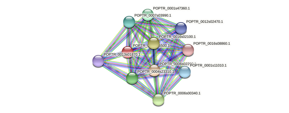 POPTR_0001s16500.1 protein (Populus trichocarpa) - STRING interaction network