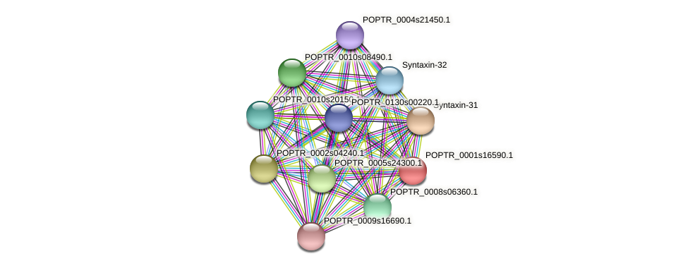 POPTR_0001s16590.1 protein (Populus trichocarpa) - STRING interaction network