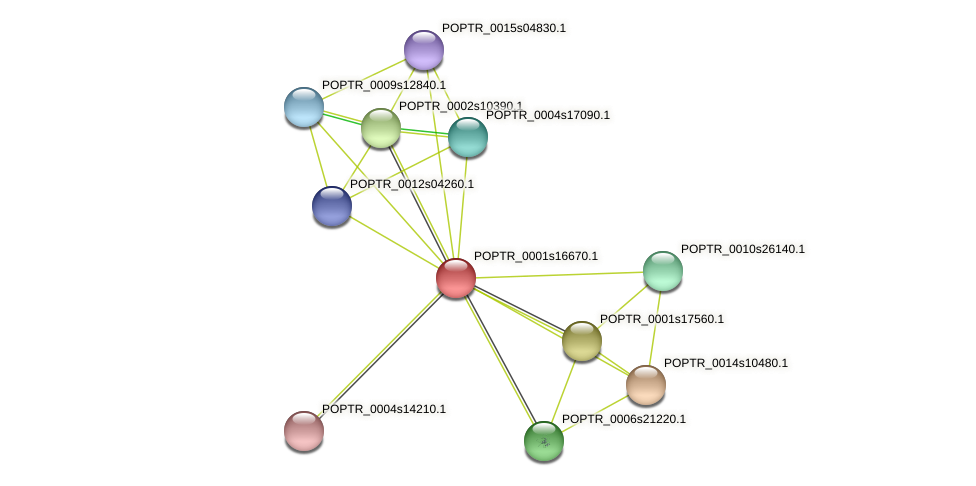POPTR_0001s16670.1 protein (Populus trichocarpa) - STRING interaction network