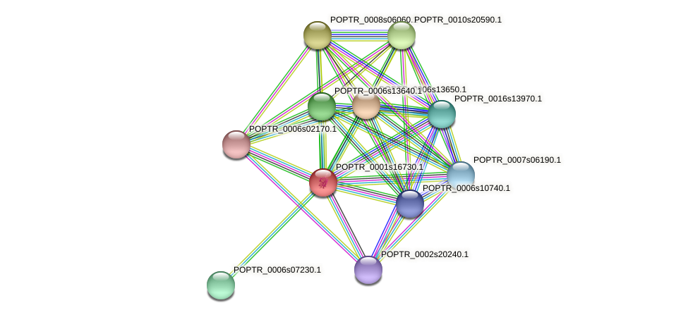 POPTR_0001s16730.1 protein (Populus trichocarpa) - STRING interaction network