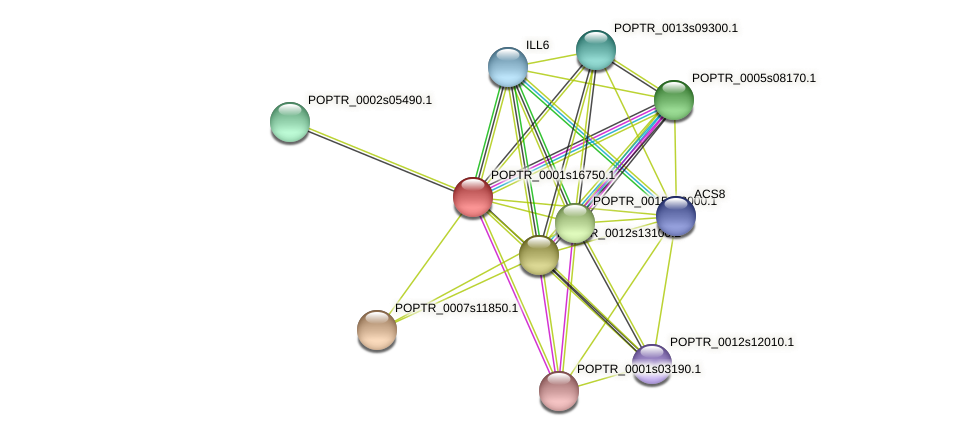 POPTR_0001s16750.1 protein (Populus trichocarpa) - STRING interaction network