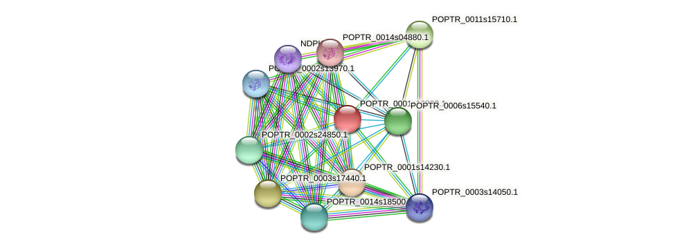 POPTR_0001s16830.1 protein (Populus trichocarpa) - STRING interaction network