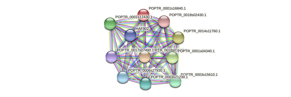 POPTR_0001s16840.1 protein (Populus trichocarpa) - STRING interaction network