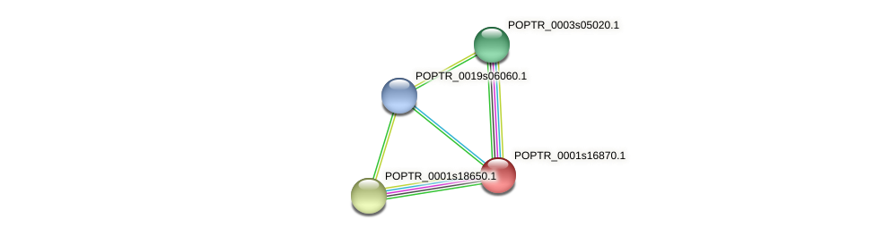 POPTR_0001s16870.1 protein (Populus trichocarpa) - STRING interaction network