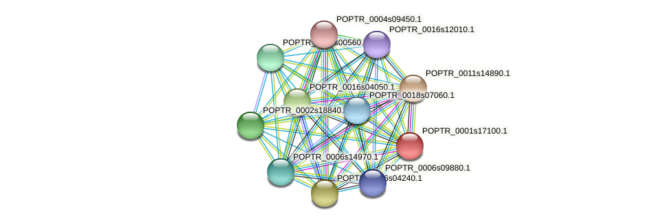 POPTR_0001s17100.1 protein (Populus trichocarpa) - STRING interaction network