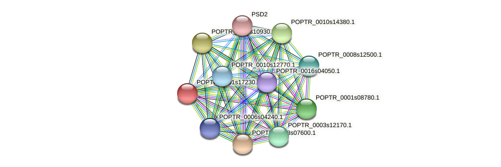 POPTR_0001s17230.1 protein (Populus trichocarpa) - STRING interaction network