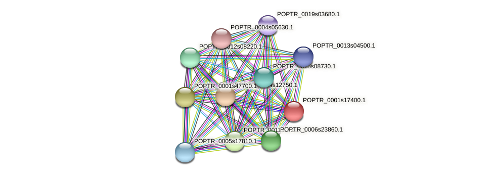 POPTR_0001s17400.1 protein (Populus trichocarpa) - STRING interaction network