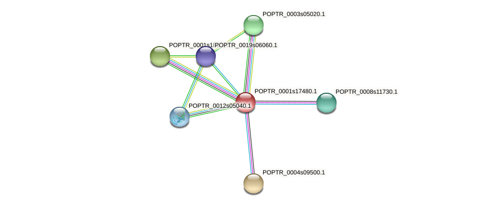 POPTR_0001s17480.1 protein (Populus trichocarpa) - STRING interaction network
