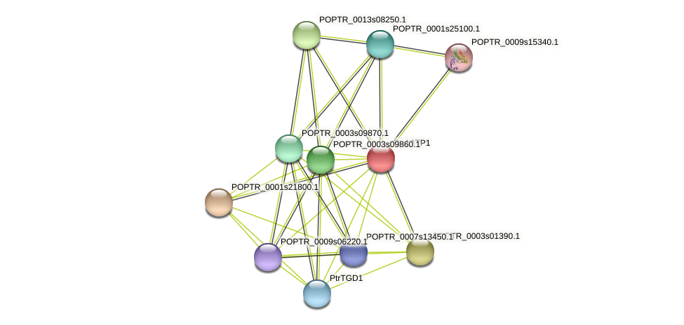 POPTR_0001s17520.1 protein (Populus trichocarpa) - STRING interaction network