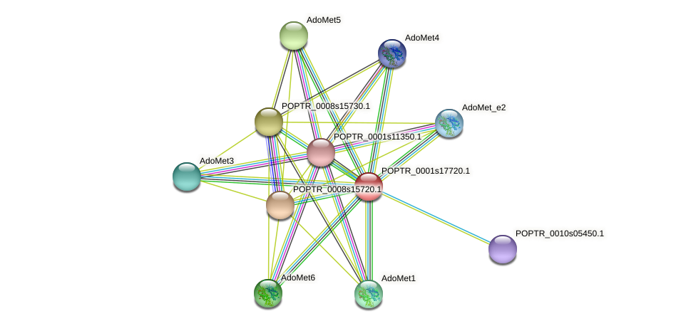 POPTR_0001s17720.1 protein (Populus trichocarpa) - STRING interaction network