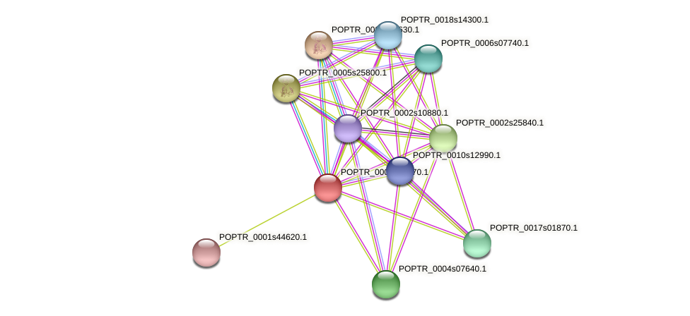 POPTR_0001s17770.1 protein (Populus trichocarpa) - STRING interaction network