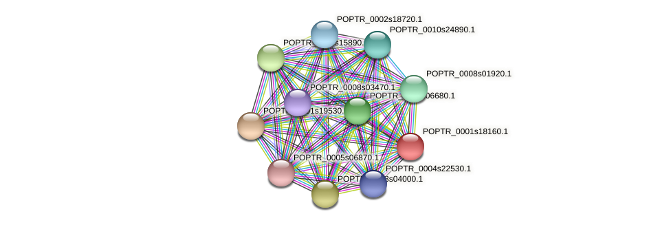 POPTR_0001s18160.1 protein (Populus trichocarpa) - STRING interaction network
