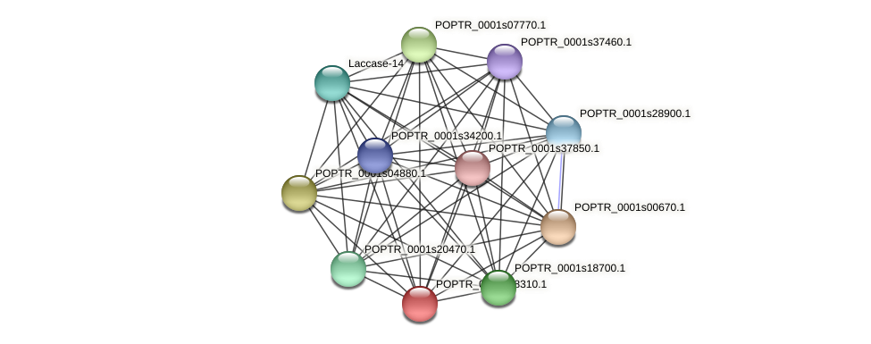 POPTR_0001s18310.1 protein (Populus trichocarpa) - STRING interaction network