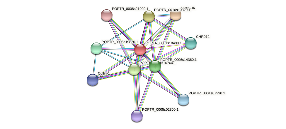 POPTR_0001s18490.1 protein (Populus trichocarpa) - STRING interaction network