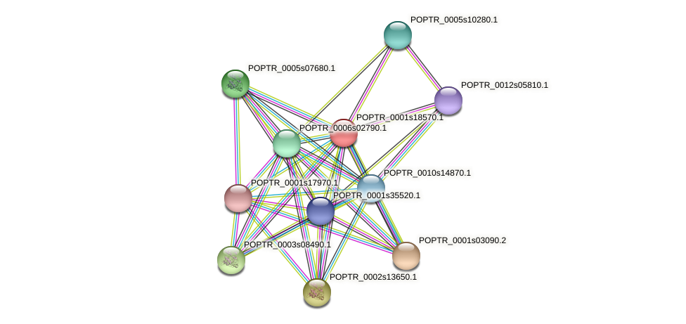 POPTR_0001s18570.1 protein (Populus trichocarpa) - STRING interaction network