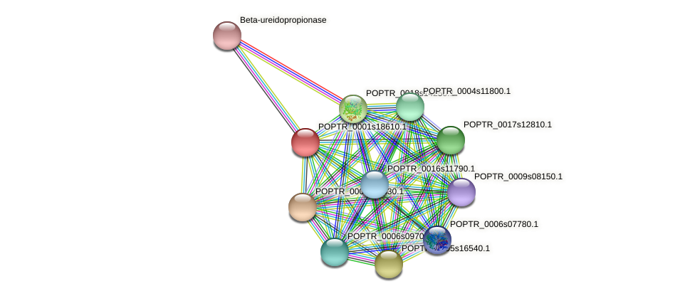 POPTR_0001s18610.1 protein (Populus trichocarpa) - STRING interaction network