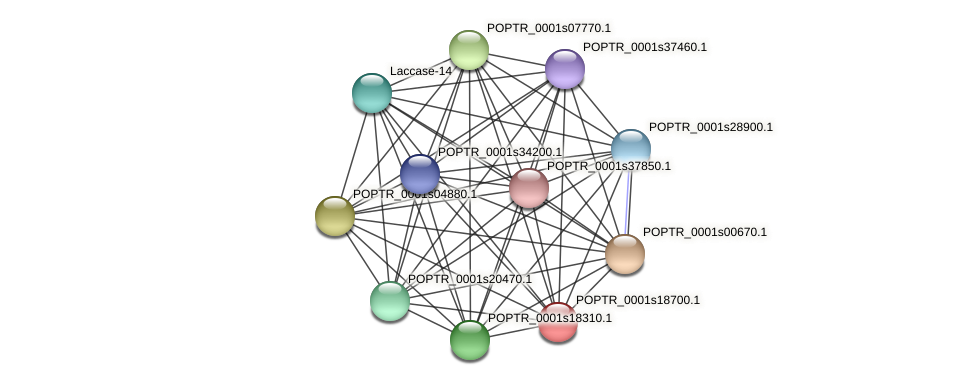 POPTR_0001s18700.1 protein (Populus trichocarpa) - STRING interaction network
