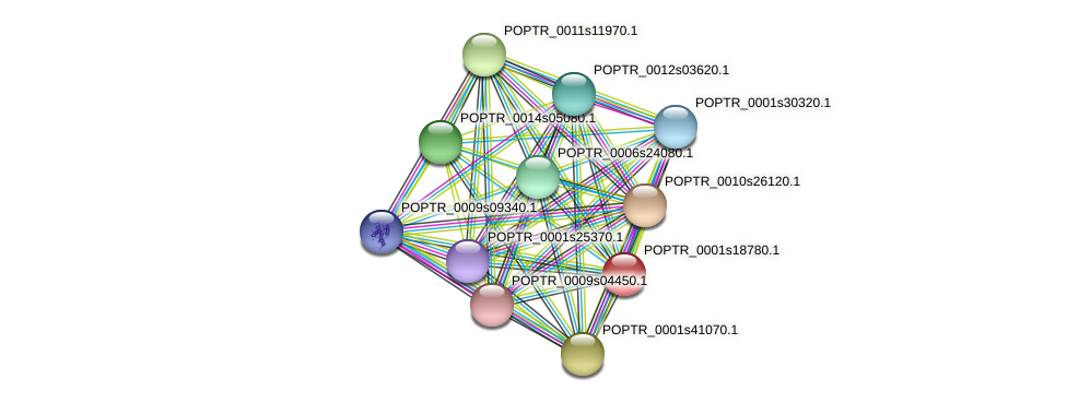 POPTR_0001s18780.1 protein (Populus trichocarpa) - STRING interaction network