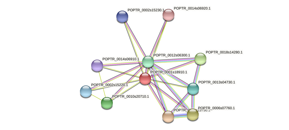 POPTR_0001s18910.1 protein (Populus trichocarpa) - STRING interaction network